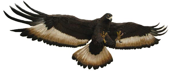 stephanes paper mache eagle