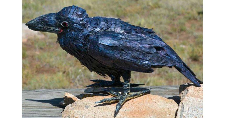 Kelly Moran's paper mache raven- slider