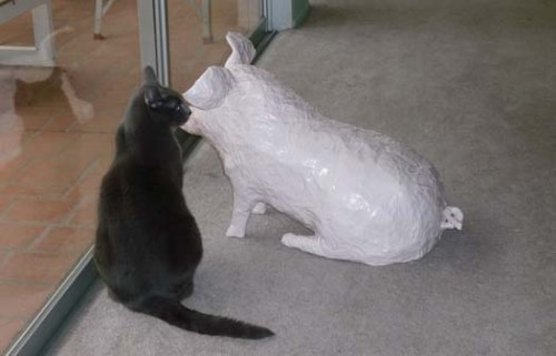 lindas paper mache pig with cat