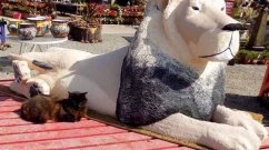 terry camps paper mache cecil at cambria nursery