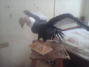 carlos moran's paper mache condor