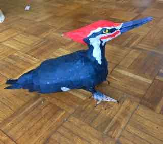 Phoebe Sparrow Wagner bird